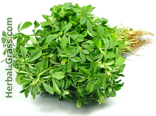 fenugreek-boswellia-plus-nsp-extract-powder-photo-herbal-grass-com-ru-ua-medicinal-plants-photo-msk-spb-kiev-kharkov-moskva-odessa-lvov-lviv-st-petersburg