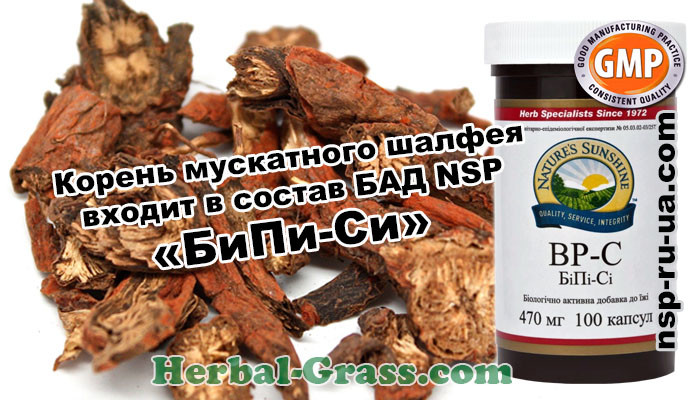 salvia-sclarea-clary-sage-root-capsules-extract-powder-photo-herbal-grass-ru-ua-com-medicinal-plants-photo-msk-spb-kiev-kharkov-moskva-odessa-lvov-lviv-st-petersburg